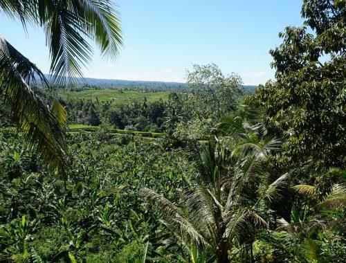 Bali, verdure, palmiers, cocotiers, jungle, île des Dieux, Indonésie, Asie, voyage, Vitaminsea