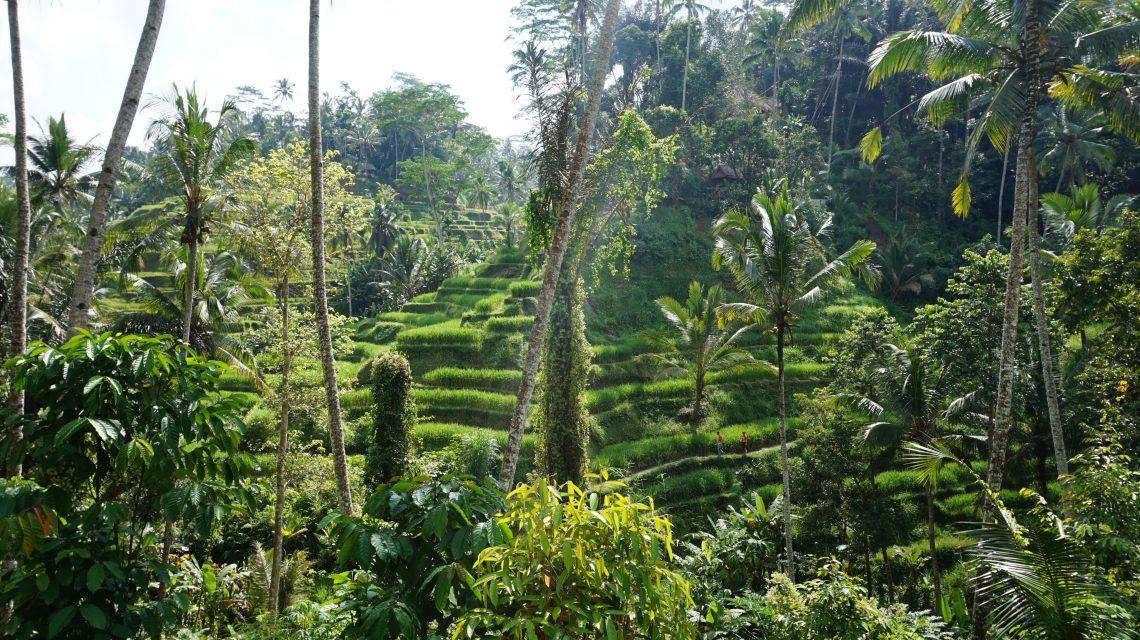 Bali, rizières, Tegalalang, Ubu, Indonésie, île des dieux, nature, voyage, blog Vitaminsea
